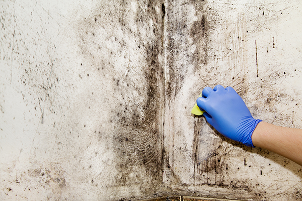 Do You Need a Mold Test in Your Home?